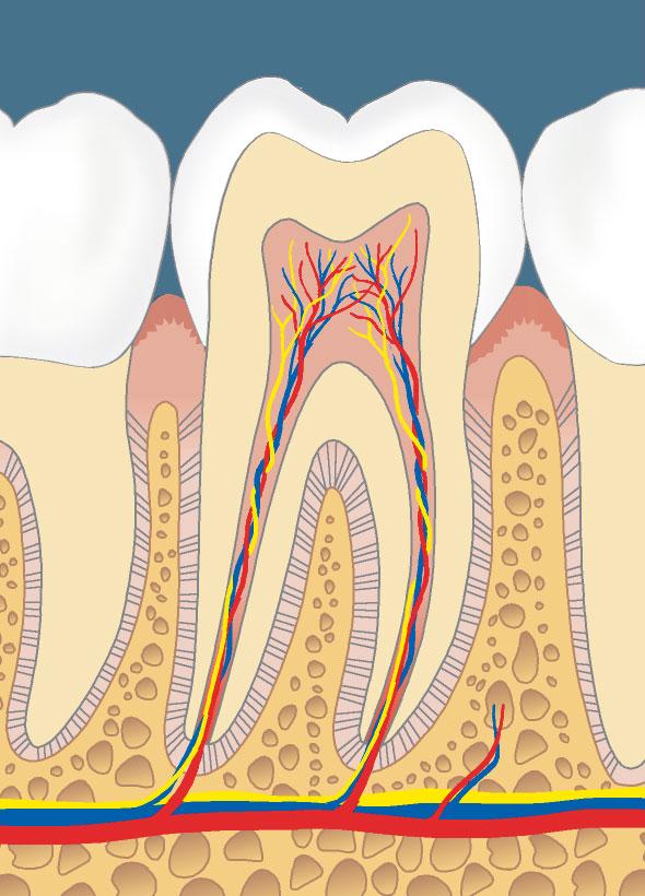 gesundes Zahnfleisch
